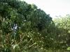 lychee-brewster