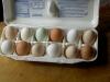 rainbow-eggs